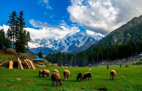 The Best of Pakistan Tour